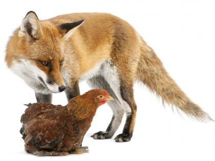Oracle Cloud: The Audit Fox In The Hen House